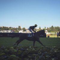 Czech Derby Races